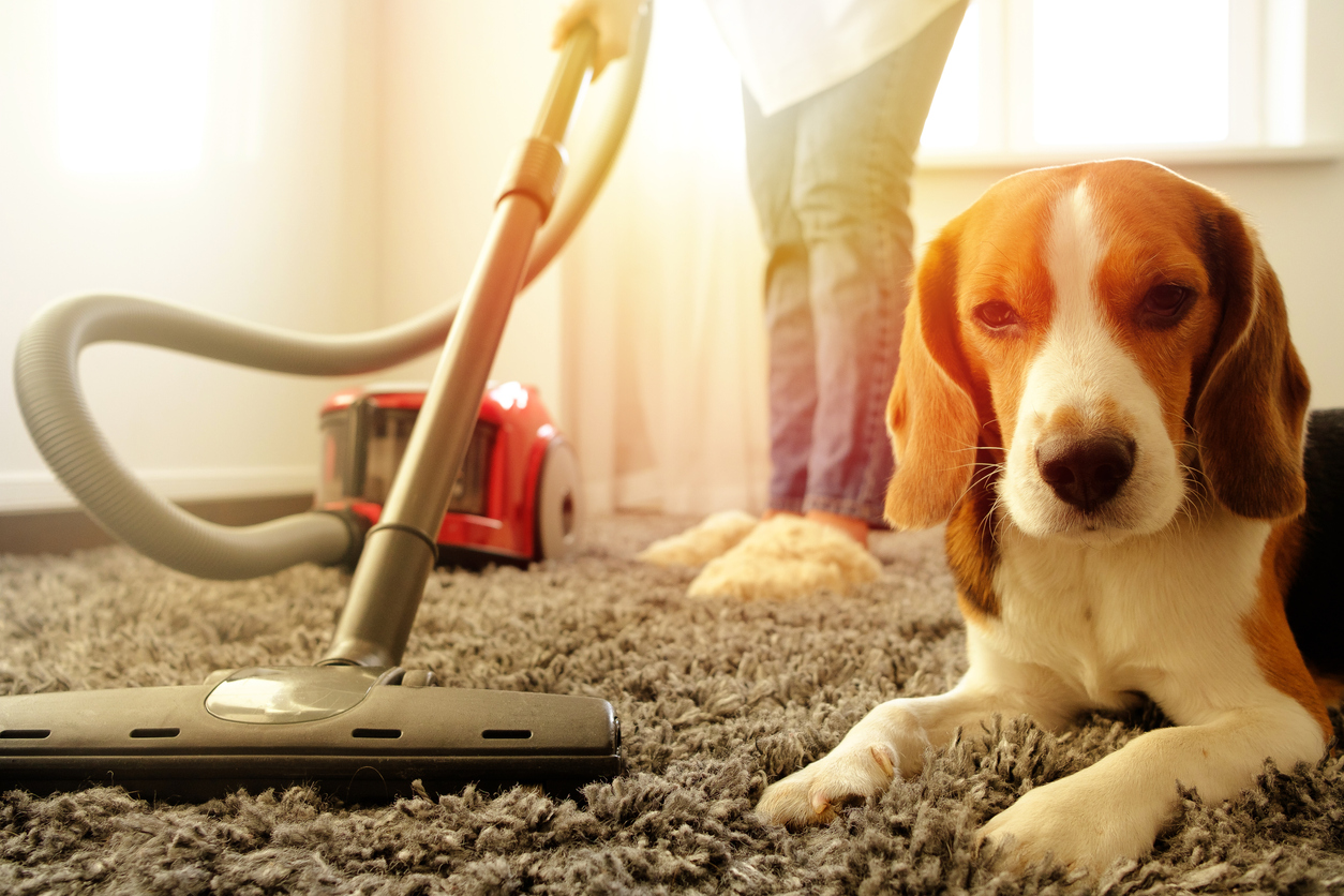 carpet cleaning with dog